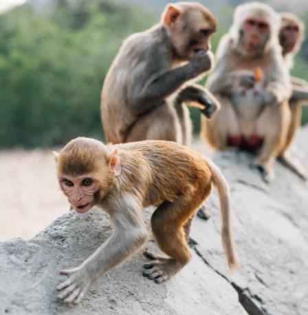 Bedre turisme til fordel for dyrene